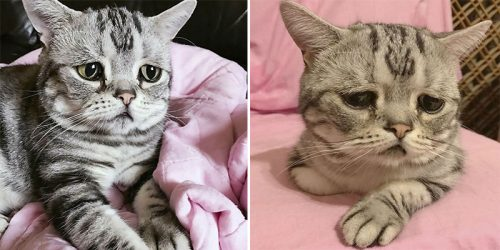 Meet Luhu, Cat with Saddest Eyes in the World