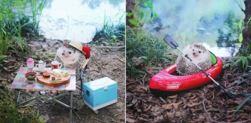 Tiny Hedgehog Goes Camping – Will Have You Smiling All Day