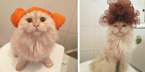Meet Meepo – Fluffy Cat Who Loves Taking Showers