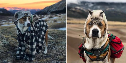 BFF's Cat and Dog Take Hikes Together