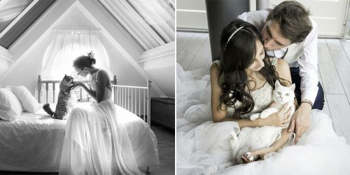 Private Post-Wedding Photo-Shoots with Cats