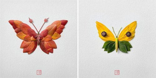 Flower Arrangements – Colorful Butterflies and Moths by Raku Inoue