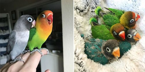 Kiwi the Colorful Parrot and his Goth Girlfriend Just Had 4 Adorable Baby Birds