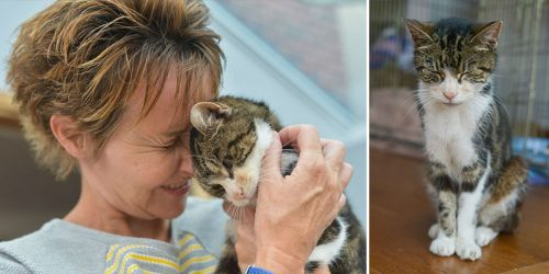 Lost Cat 13 Years Later Finally Reunited With Its Dear Owner – Prepare to Tear Up!