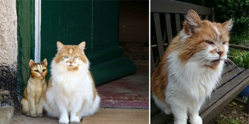 30 Year Old Cat – The Oldest Cat in the UK