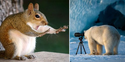20 Finalists for 2018 Comedy Wildlife Photography Awards