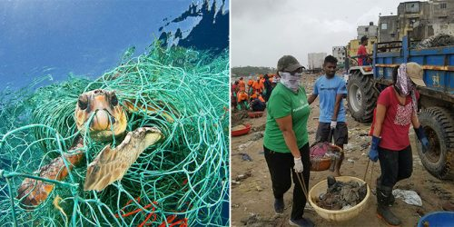 World's Largest Beach Cleanup Project Brings Back Sea Turtles in Mumbai After 20 Years of Absence