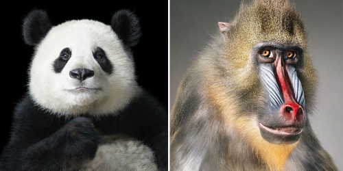 Never Seen Before Wildlife Portraits by Tim Flach