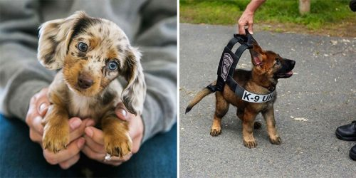 15 Puppies with Heart-Melting Powers