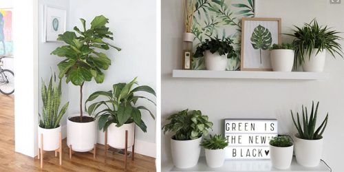 27 Best Decorative Plant Stand and Hanger Ideas