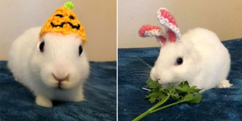 Earless 3-Legged Bunny Mimi Receives Crocheted Ears Made by her Lovely Owner