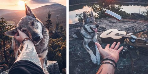 Adventurer Pets His Wolfdog Everywhere They Go