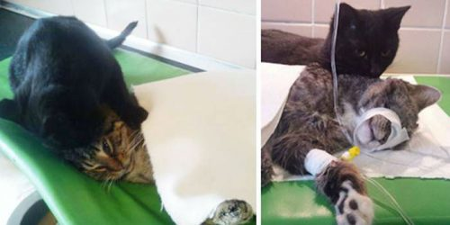 'Nurse Cat' Comforting Sick Animals by Never Living Their Side
