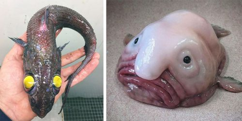 Scary Deep Sea Creatures