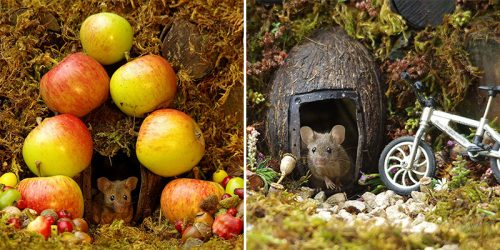 Photographer Finds Mice Family in his Garden and Builds them a Tiny Village