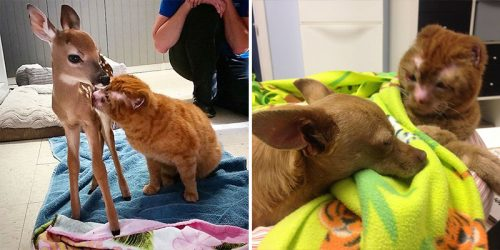 Cat Survives a House Fire, Now Comforts Other Animals at Animal Hospital