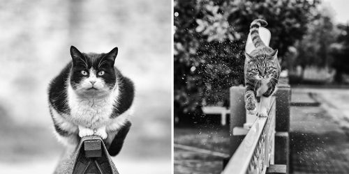 Monorail Cats Meme Meets Photography by Sabrina Boem