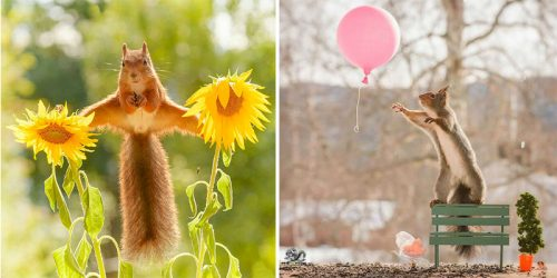 Red Squirrels Visit this Award Winning Photographer Every Day = Magical Photo Series