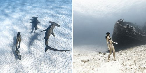 The Award-Winning Underwater Photographer Brings Ocean and All the Beauty of Sea Life to Us