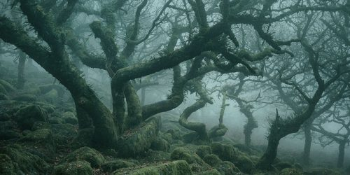 Mystic – by Neil Burnell – Wistman's Wood in Dartmoor
