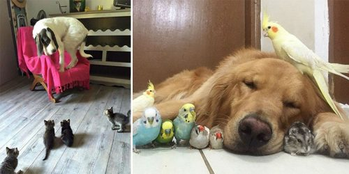 Hilarious yet Sweet Photos of People Living with More Than 3 Pets