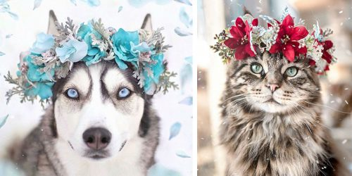 Mesmerizing Flower Crowns Presented by Our Beloved Pets