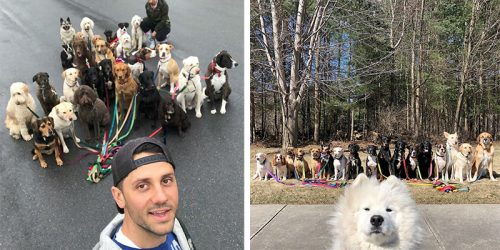 Meet Saratoga's Charming Dogs Who Pack Walk Together Every Day Because of the Exceptional Dog Walking Service