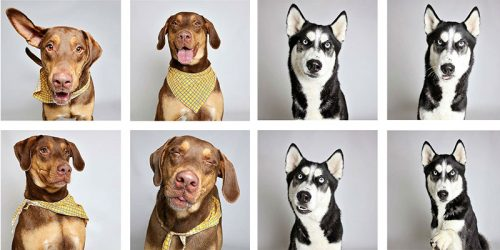 'Shelter Dog Photobooth' Show Just How Charismatic Overlooked Dogs Really Are