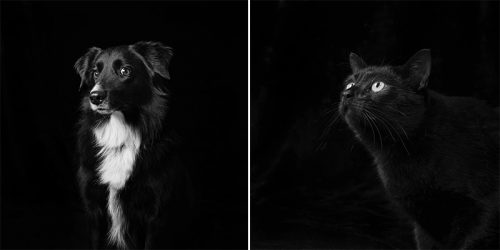 Black Dogs and Cats Never Get Adopted – Photographer Changes People's Perception of Black Shelter Pets Through Beautiful Portraits