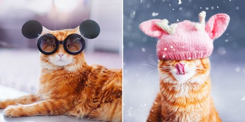 "Majestic ""Catriarch"" and His Personal Photographer – Kristina Makeeva"