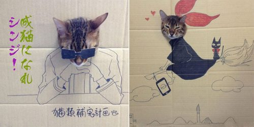 "Cardboard Cat Art for your ""Awwws"" and Laughs"