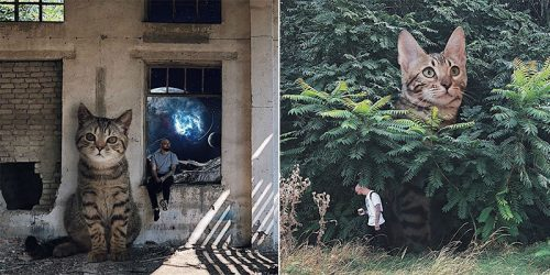 Andrey Shcherbak and His Giant Cat Project
