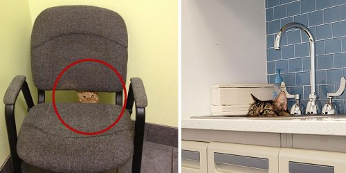 Hilarious Cats at the Vets Photos