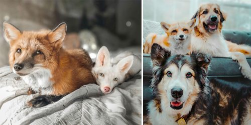 Juniper the Fox and Her Happy Family of Rescued Exotics