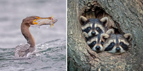 Wildlife of Canada and the U.S. by Kevin Biskaborn