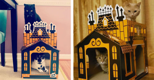 Cat's Haunted Mansion from Target is a Real Treat This Halloween