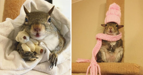 This Girl Is a Squirrel – And She Can't Sleep without Her Teddy Bear