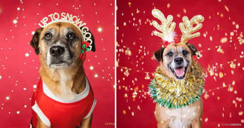 Christmas Mini Shoots – Funky Dog Portraits by Emma O'Brien
