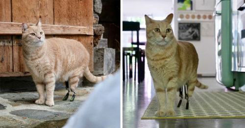 Vituzzo Superstar – The Road to Becoming a Perfect Bionic Cat