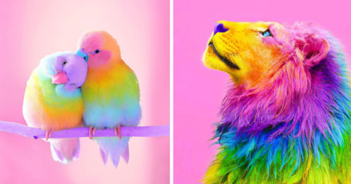 A Rainbow Makeover ft. Animals