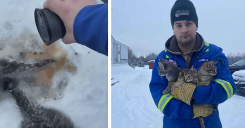 Frozen 3 – Man Uses Hot Coffee to Rescue 3 Frozen Kittens
