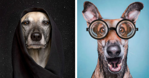 Comical Dogs' Array of Expressions and Emotions in Portraits by Elke Vogelsang