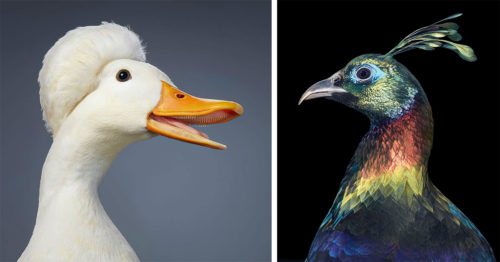 Unusual Endangered Birds – Portraits by Phenomenal Tim Flach