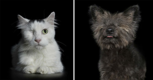 Seeing the Beauty in Imperfection – Portraits of Animals with Disabilities