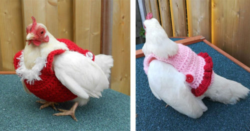 And Now, Your Chicken Can Look Extremely Stylish