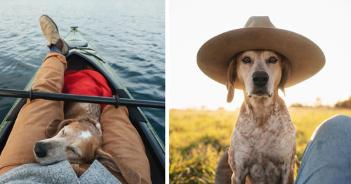Maddie the Coonhound – Best Friend and Traveling Companion of One Professional Photographer