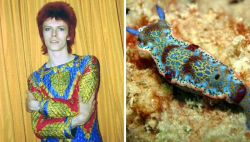 Proof, David Bowie = Sea Slug