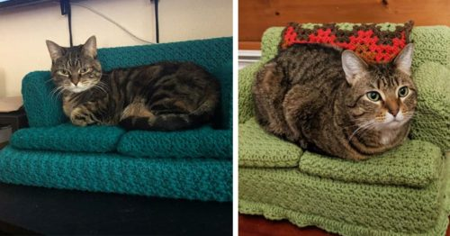 DIY – Tiny Crochet Couches for Cats – Lockdown Edition