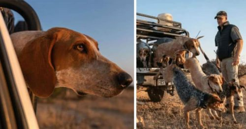 Trained Dogs Team Up to Protect African Wildlife Against Poachers – Saving 45 Rhinos in Last 2 Years