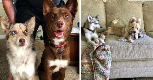 Dogs Cursing the Day They've Met Their Younger Sibling